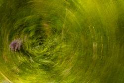 experimentelles-fotografieren-Wolzenalp_Claudia-koehler_2020-3