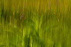 experimentelles-fotografieren-Wolzenalp_Claudia-koehler_2020-4