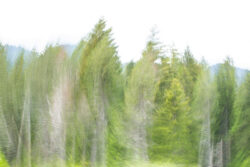experimentelles-fotografieren_wilfried-lux_2020-3