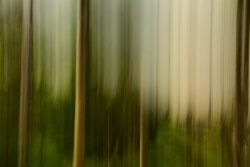 experimenteslles-fotografieren_Daniel-steiger_2020-1