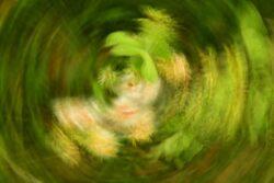 experimenteslles-fotografieren_Daniel-steiger_2020-4